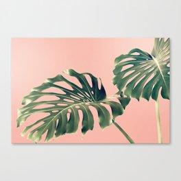 Monstera Blush Canvas Print