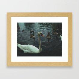 Swans of Thames River Framed Art Print