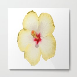 Yellow Hibiscus Flower Vector Metal Print