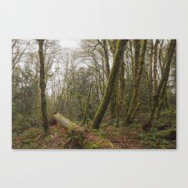 Fallen Tree // Forest Canvas Print