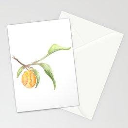 kumquat Stationery Cards