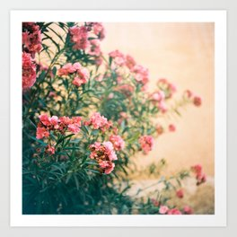 pink flowers in front of yellow wall Art Print