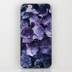 Hortensia iPhone & iPod Skin