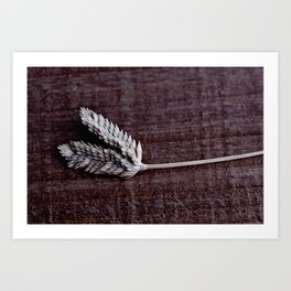 Grass Seed Rustic Art Print Digial Photography Art Print
