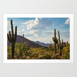 Saguaros in the Desert with Blue Sky Art Print