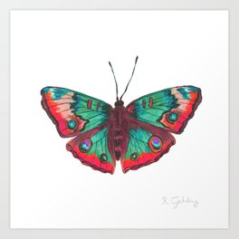 Buckeye Butterfly- Magenta Color Art Print