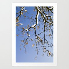 Snowy Branch Art Print