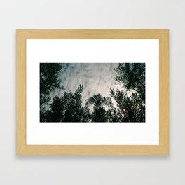 Forest 002 Framed Art Print