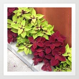 Garden Leaves Art Print