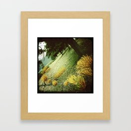 In The Trees Framed Art Print