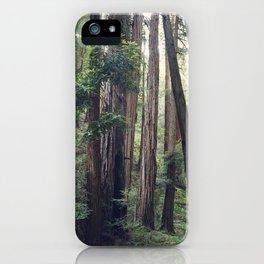 The Redwoods at Muir Woods iPhone Case
