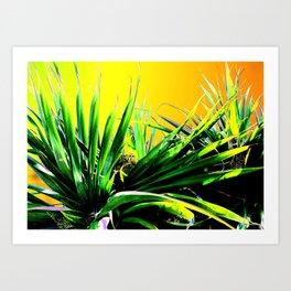 Lauhala Art Print