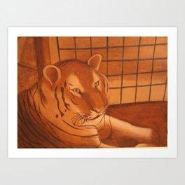 Tiger at the Zoo Art Print