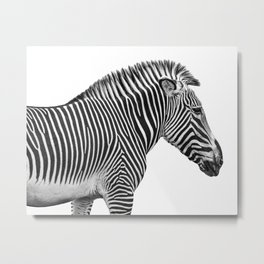 Animal Photography | Zebra | Minimalism | Wildlife Art | Black and White Metal Print