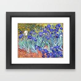 Vincent Van Gogh Irises Framed Art Print