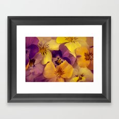 Viola bed. Framed Art Print