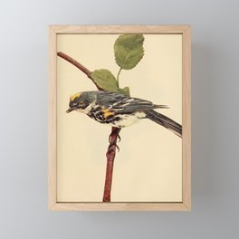 Neltje Blanchan - Bird Neighbours (1903) - Myrtle Warbler Framed Mini Art Print
