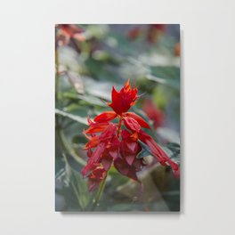 Fiercely Red Metal Print