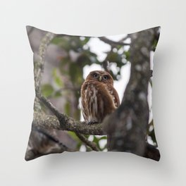 Birds from Pantanal Caburé Throw Pillow
