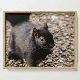 black squirrel - close up Serving Tray