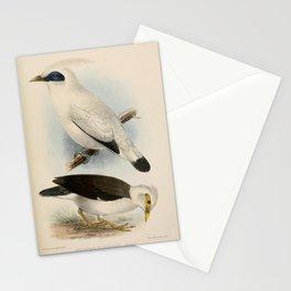 Bali Myna gracupica tertia7 Stationery Cards