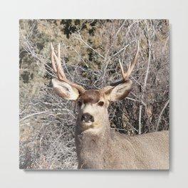 Watercolor Deer, Mule 22, Crestone, Colorado, Southern Colorado Splendor Metal Print