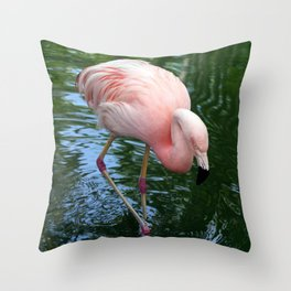 Flamingo Pretty In Pink Throw Pillow