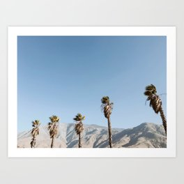 Desert Palm Trees / Cabazon, California Art Print