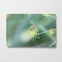 Bee and the fennel Metal Print