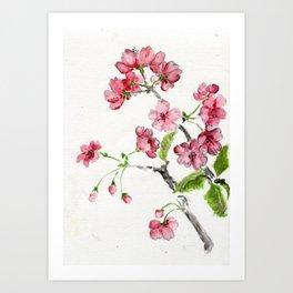 La Fleur de Malus Art Print