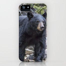 American Black Bear, No. 1 iPhone Case