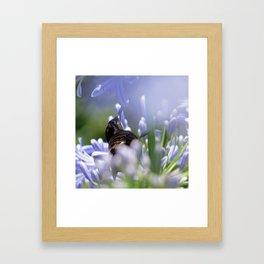 Honeybird amongst the agapanthas Framed Art Print