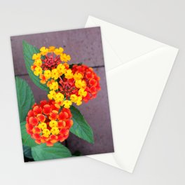 Codominance Stationery Cards