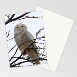 Snowy Owl in the Treetop Stationery Cards