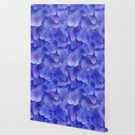 Hydrangea blue Wallpaper