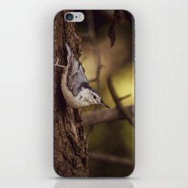 Nuthatch Morning iPhone Skin