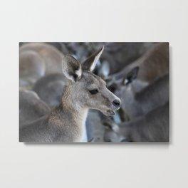 The Kangaroo Metal Print
