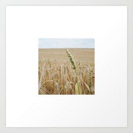 French Wheat Field Art Print
