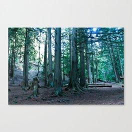 In the Cedars  Canvas Print