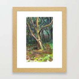 Briars Cedar Pine Framed Art Print