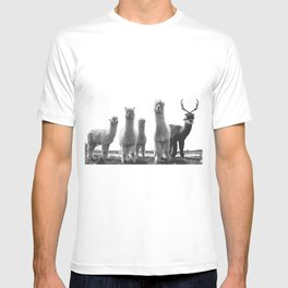 alpaca posse T-shirt