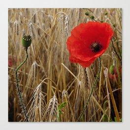 Cornfield Poppy Canvas Print