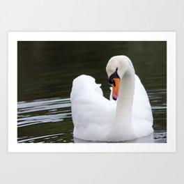 Swan in water2 Art Print