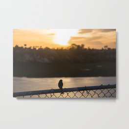 Even birds watch the sunset Metal Print