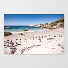Penguins on Boulders Beach in Cape Town, South Africa Canvas Print