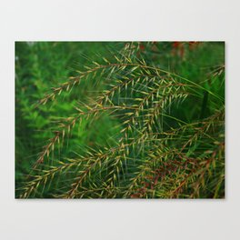 Sparkling meadow grass Canvas Print