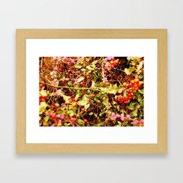 Winter blossom and berries Framed Art Print