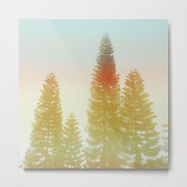 #02#Foggy pine trees Metal Print