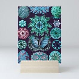 Ernst Haeckel Ascidiae Sea Squirts Mini Art Print