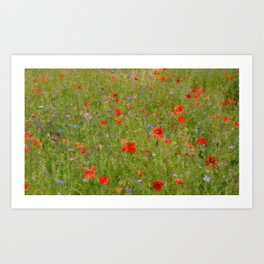 Field of Poppies (in mosaic) Art Print